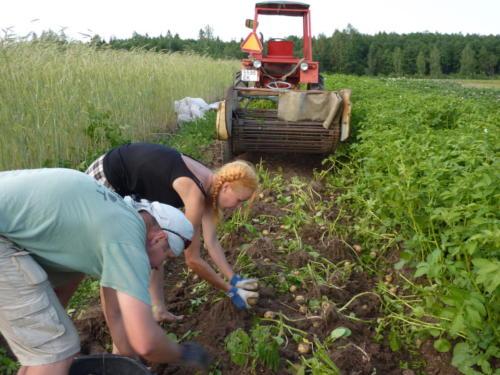 Proovisime ka mahe kartulit kasvatada