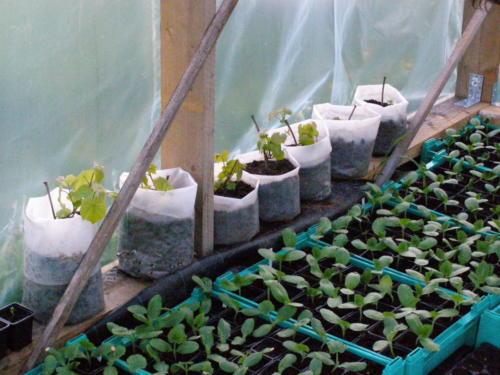 Taimede ettekasvatus